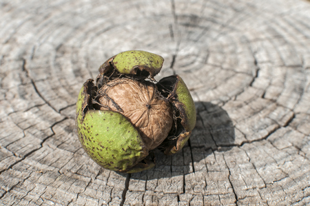 Walnut shell inside its green husk closeup on cut wooden trunk background Stock Photo - 124257101