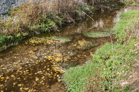 Calm waters of small creek passing through an autumn forest meadow Stock Photo
