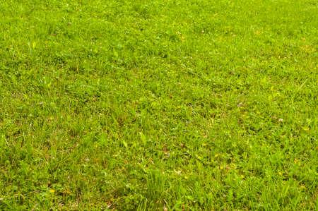 Green grass meadow closeup as natural background Stok Fotoğraf