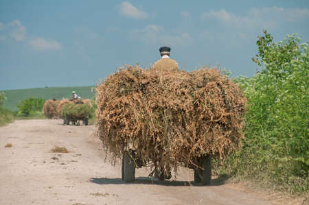 Rural cart loaded with hay on dusty country road in sunny summer day