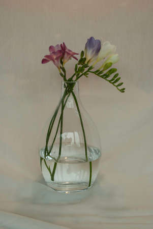 Glass vase with flowers on white background