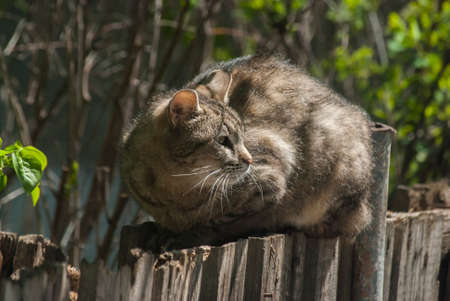 Street cat laying on old wooden garden fence closeup