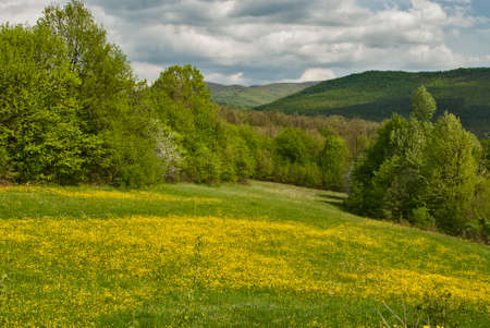 Meadow with yellow blooming spring flowers landscape