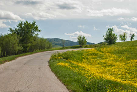 Country road bend with yellow meadow springtime landscape Standard-Bild