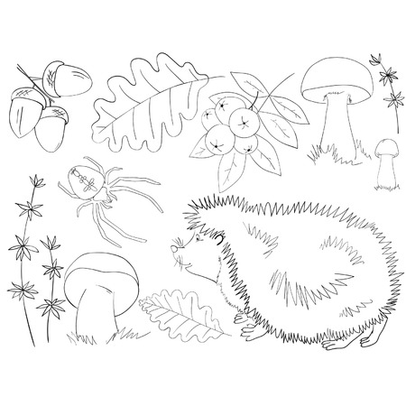 cep: Elements of autumn forest life on white background Illustration