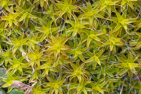 background  grass: macro picture of vegetation background grass moss natural