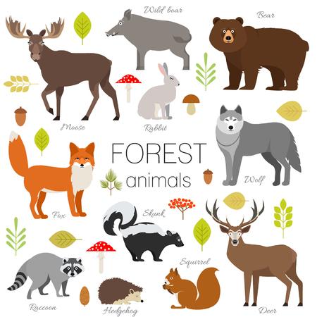 Conjunto de animales del bosque aislados del vector. Alces, jabalíes, oso, zorro, conejo, mapache lobo mofeta ciervos ardilla hendgehog