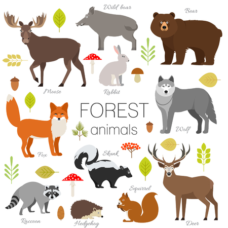 Set of forest animals isolated vector. Moose, wild boar, bear, fox, rabbit, wolf skunk raccoon deer squirrel hendgehog