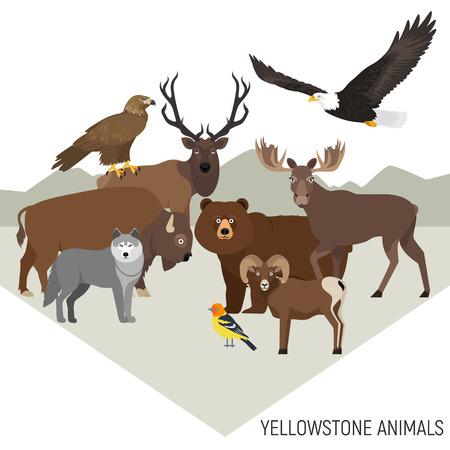 aguila real: Parque Nacional de Yellowstone animales composición con grizzly, alces, oso, el lobo, el águila real, el bisonte, el borrego cimarrón, el águila calva, tanager occidental, aislado en fondo transparente