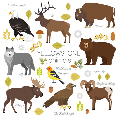 Yellowstone National Park animals set grizzly, moose, elk, bear, wolf, golden eagle, bison, bighorn sheep, bald eagle, western tanager, isolated on transparent background vector illustration. 版權商用圖片 - 69321977
