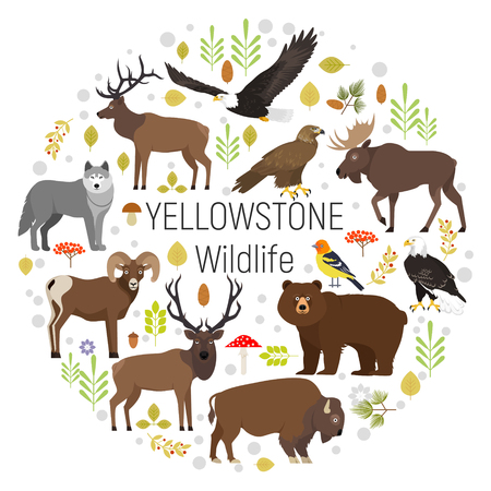 Circle vector set of plants and Yellowstone National Park animals grizzly, moose, elk, bear, wolf, golden eagle, bison, bighorn sheep, bald eagle, western tanager, isolated on transparent background Illustration