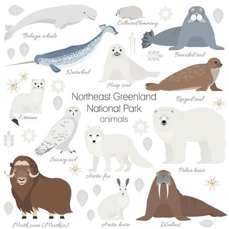 gronostaj: Greenland National park animal set. White polar bear, narwhal, whale, musk ox, seal, walrus, arctic fox, ermine rabbit arctic hare
