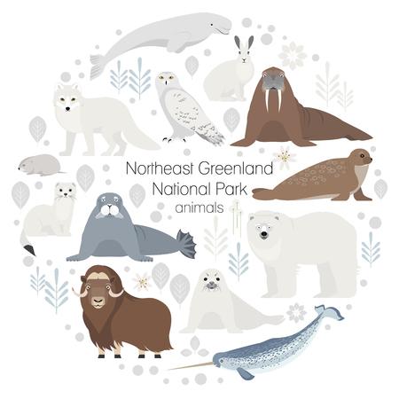 Polar animals. Vector collection of animals .Polar bear,narwal, whale, musk ox, seal, walrus arctic fox ermine Stock Photo