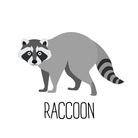 Ilustración vectorial de dibujos animados lindo mapache aislado
