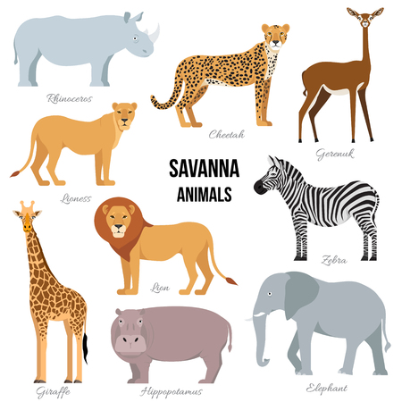 African animals of savanna elephant, rhino, giraffe, cheetah, zebra, lion, hippo isolated. Vector illustration