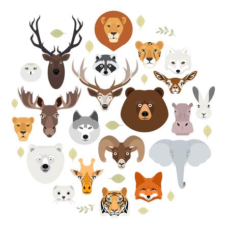Big animal face icon set. Cartoon heads of fox, rhino, bear, raccoon, hare, lion, owl, rabbit, wolf, hippo, elephant, tiger, giraffe, moose, deer, elk, sheep, ram, ermine Stock Photo