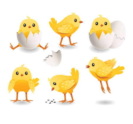 Cute chicks set. Little cute yellow bird in cracked egg. Baby of chicken. Farm vector illustration