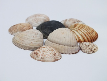 Macro picture from shellfish with white background