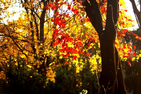 The sun is shining behind oh the leaves Stock Photo