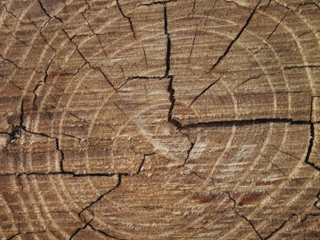 Close up picture from growth ring on a tree