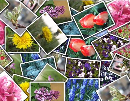 Photo montage from some kind of flowers