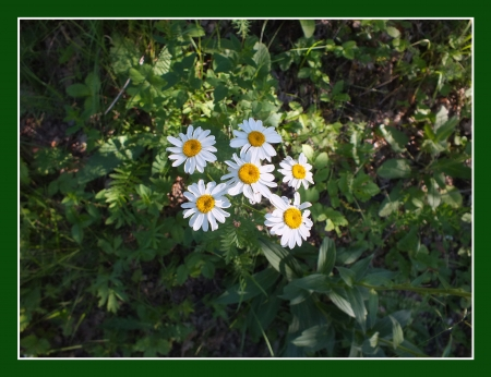 White flowers in the forest with frame Stock Photo - 17354687