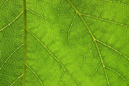 Macro close up photography from a leaf