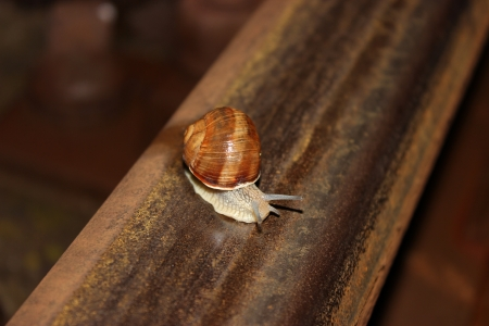 Little snail is on a railroad - nature photography