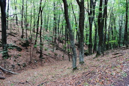 Deep beech forest in Hungary - nature photography