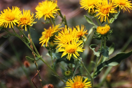 Bright yellow flowers in the nature - nature photography Stock Photo