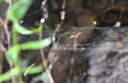 Spider is waiting on the web - insect photography