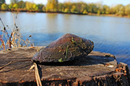 Calm shell at the lake - nature photography