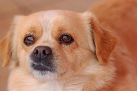 Portrait of a little mixed dog with big brown eyes Stock Photo