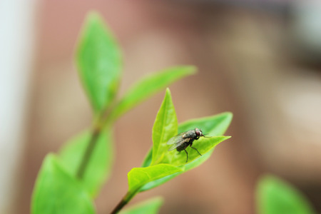 House fly on a leaf - insect photography