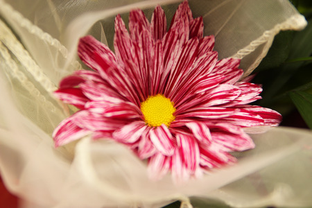Beautiful colorful flower - flower photography