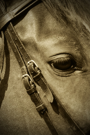 Portrait of a nice horse in the pasture