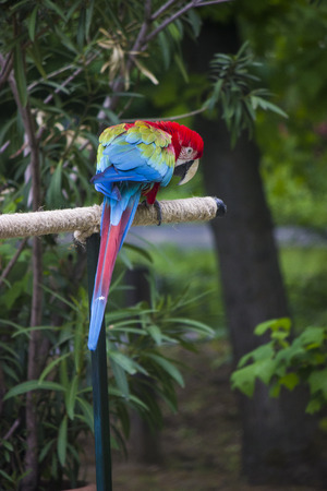 Beautiful macaw parrot in a zoo - zoo photography