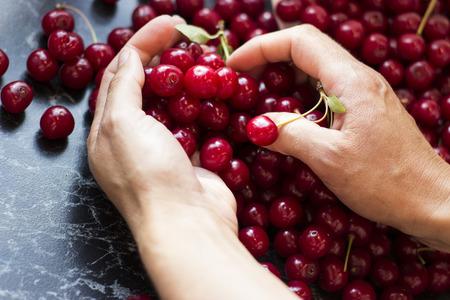 Female hands holding fresh sour cherries Stock Photo