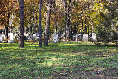 trees photography: Graves with trees - outdoor photography