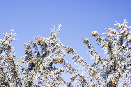 frozen trees: Frozen trees against blue sky - outdoor photography