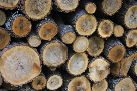Pile of logs in the forest - outdoor photography Stock Photo