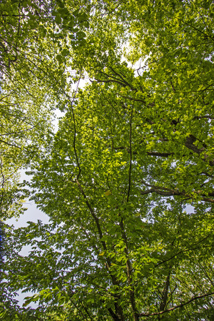 mixed trees in the forest - nature photography Stock Photo