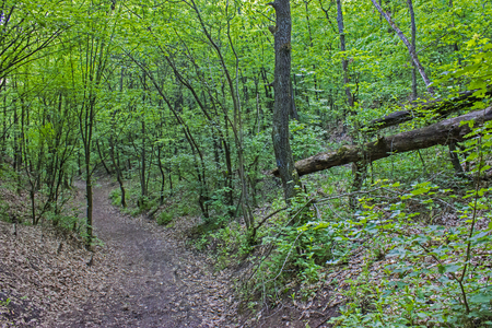 Forest path in the spring - outdoor photography Stock Photo
