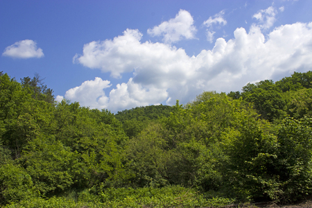 Summer sky with trees and clouds - nature photography Stock Photo