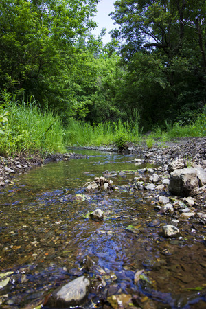 Creek deep in the forest - outdoor photography Stock Photo