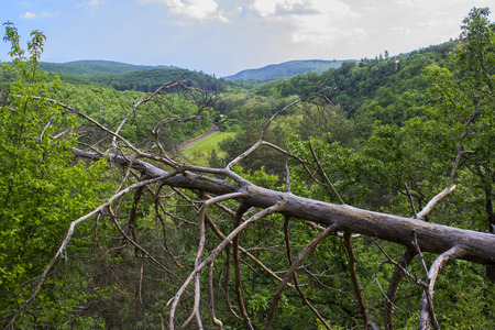 Fallen tree in the forest - outdoor photography