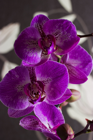 Purple orchid - flower photography in the studio