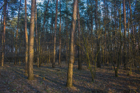 Outdoor photography - in the deep of the forest