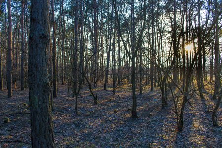 Outdoor photography - Sunset in the forest