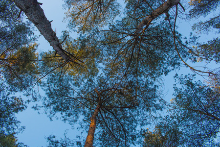Outdoor photography - looking up in the forest